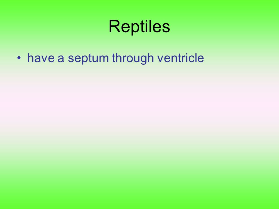 Reptiles have a septum through ventricle