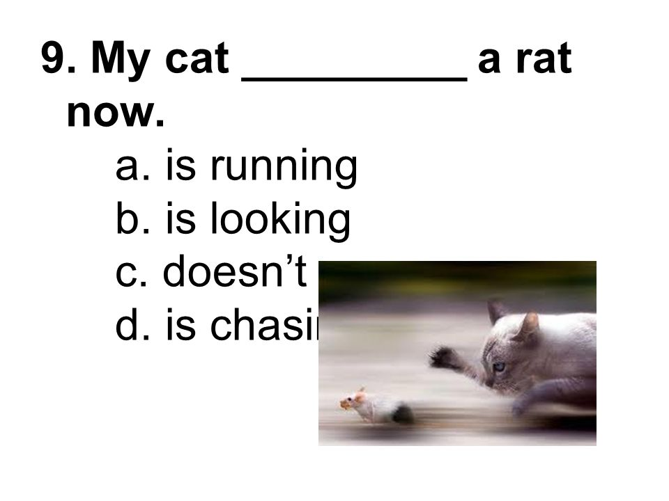 9. My cat _________ a rat now. a. is running b. is looking c. doesn't d. is chasing