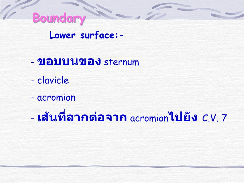 Boundary Lower surface:- - ขอบบนของ sternum - clavicle - acromion