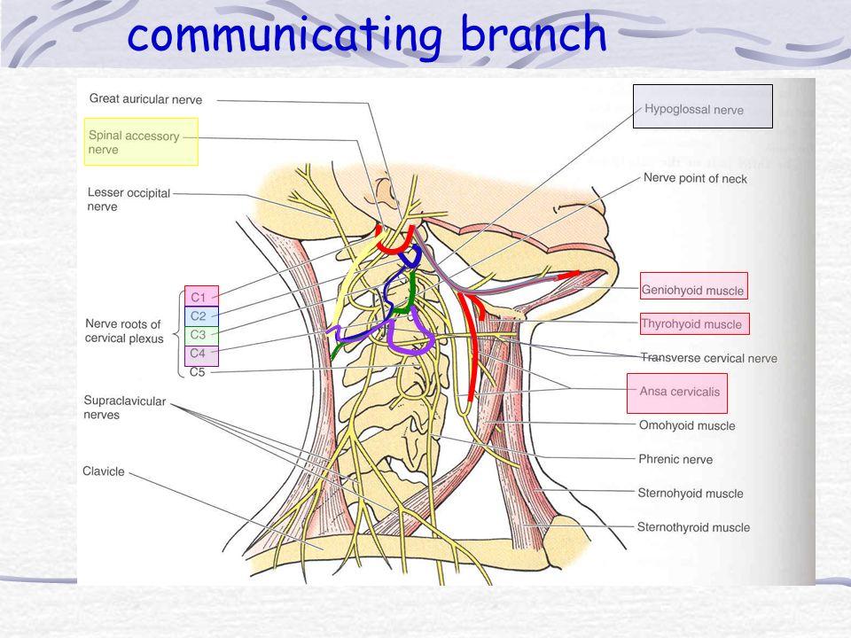 communicating branch