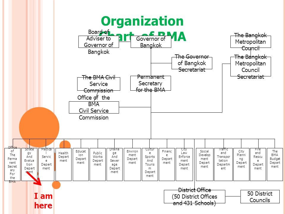 Organization Chart of BMA