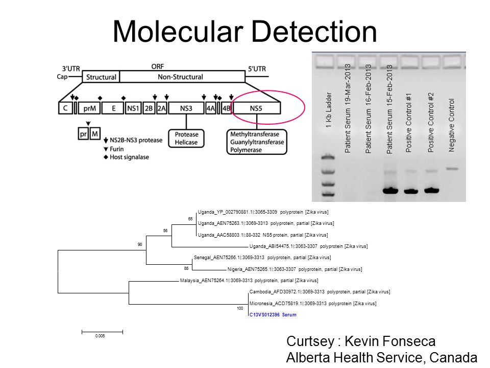 Molecular Detection Curtsey : Kevin Fonseca