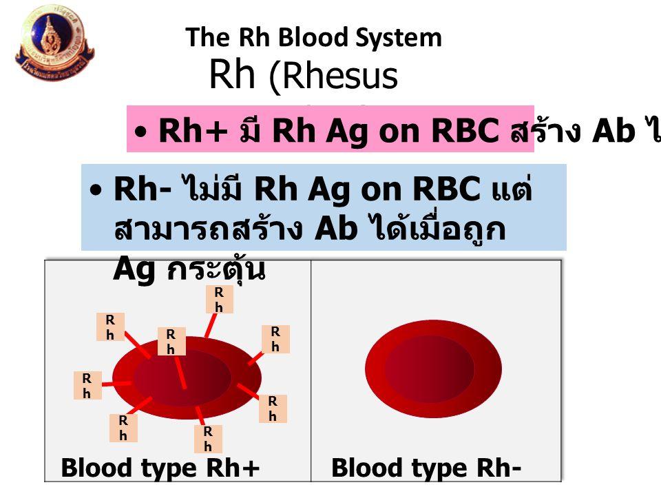 Rh (Rhesus monkey) Rh+ มี Rh Ag on RBC สร้าง Ab ไม่ได้