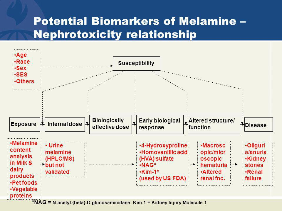 Potential Biomarkers of Melamine – Nephrotoxicity relationship