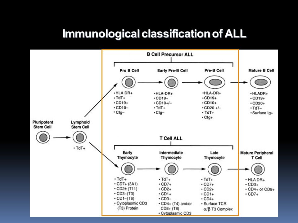 Immunological classification of ALL