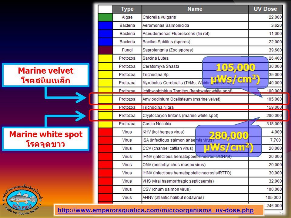 105,000 µWs/cm2) 280,000 µWs/cm2) Marine velvet โรคสนิมเหล็ก