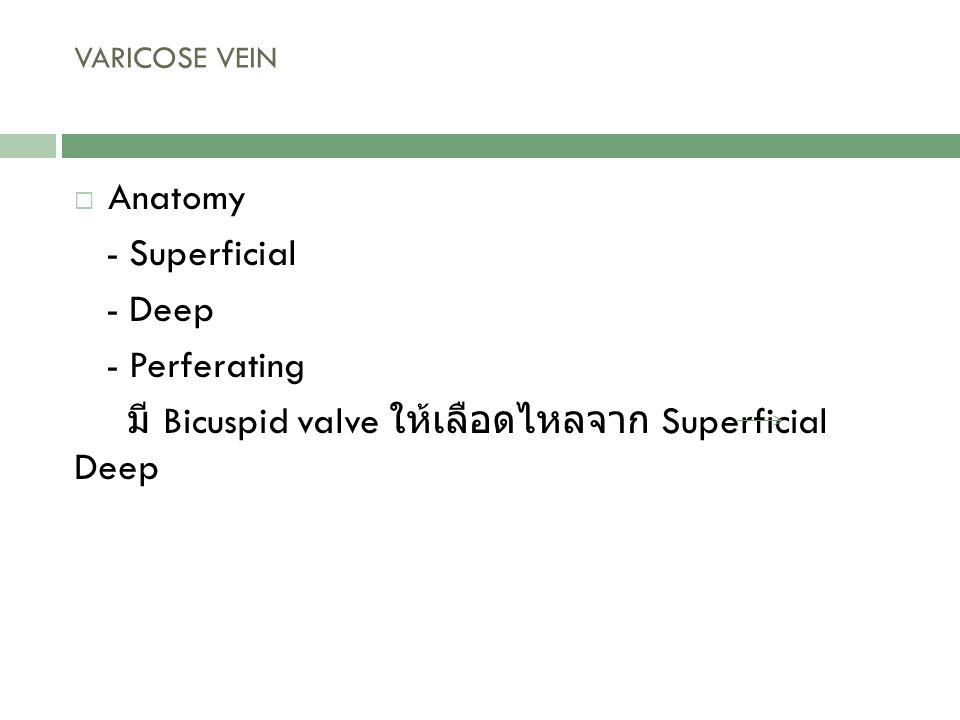 มี Bicuspid valve ให้เลือดไหลจาก Superficial Deep