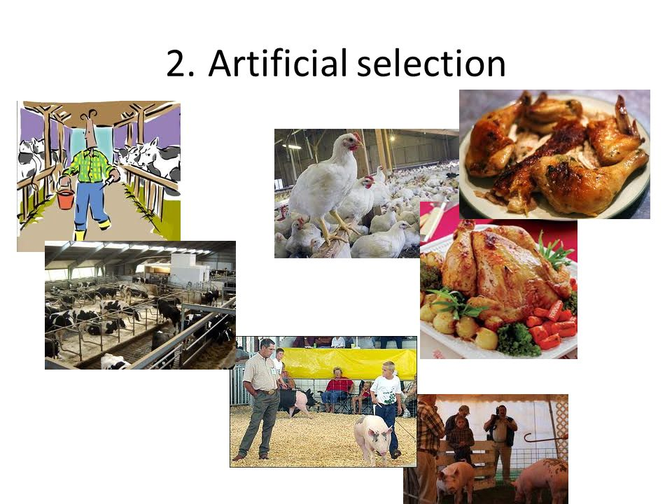 2. Artificial selection