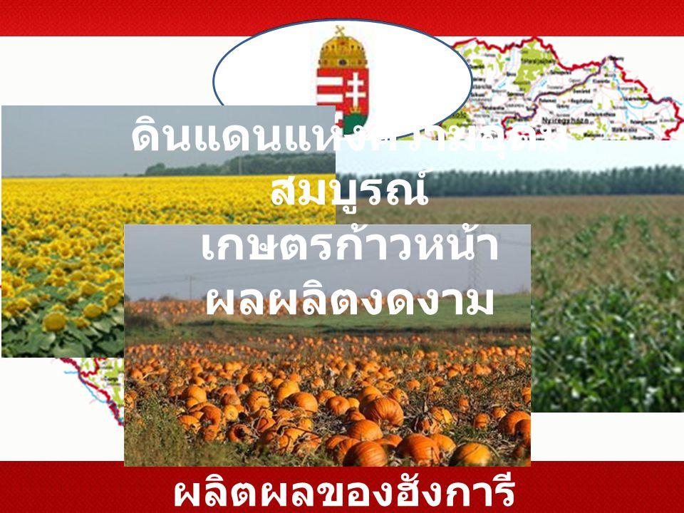 ดินแดนแห่งความอุดมสมบูรณ์ เกษตรก้าวหน้า ผลผลิตงดงาม