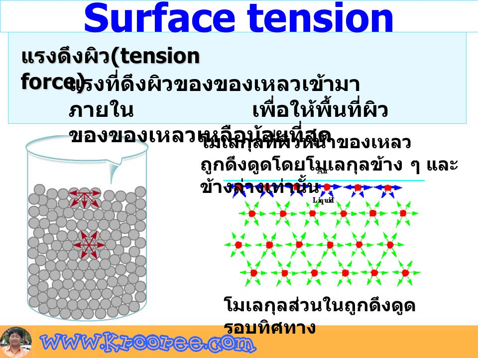 Surface tension แรงดึงผิว(tension force)