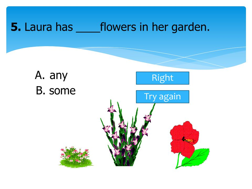 5. Laura has ____flowers in her garden.