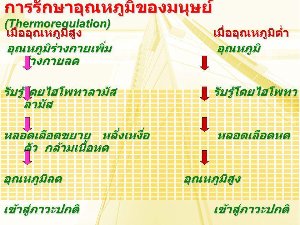 การรักษาอุณหภูมิของมนุษย์ (Thermoregulation)