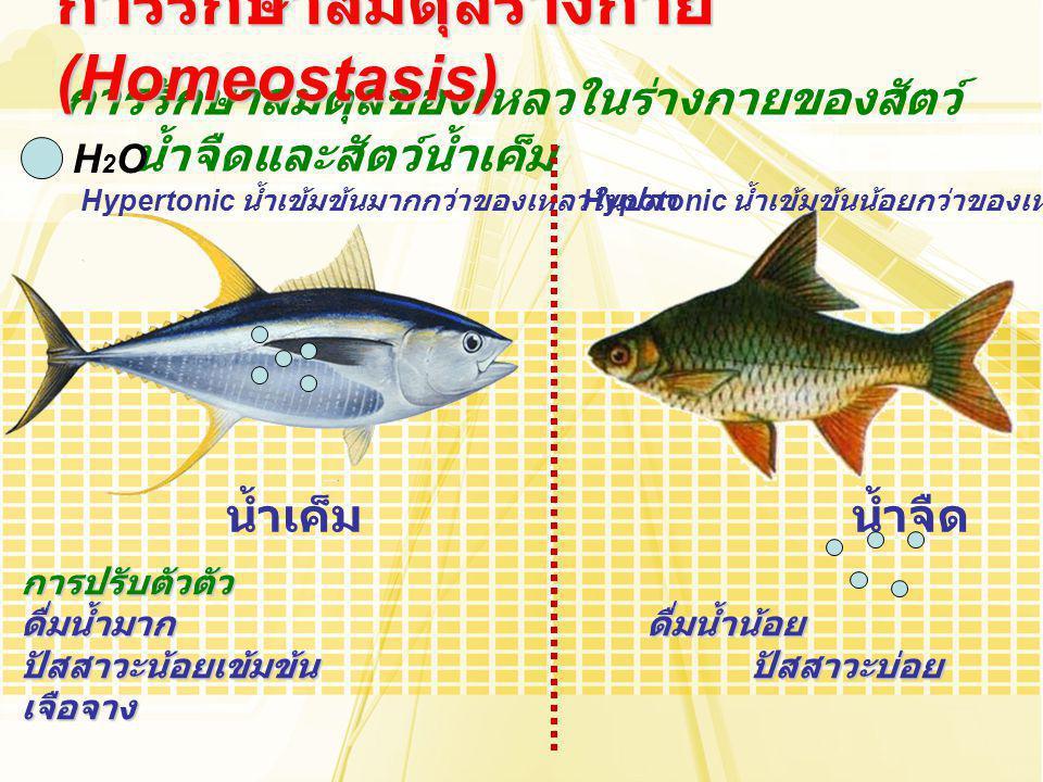 การรักษาสมดุลร่างกาย (Homeostasis)