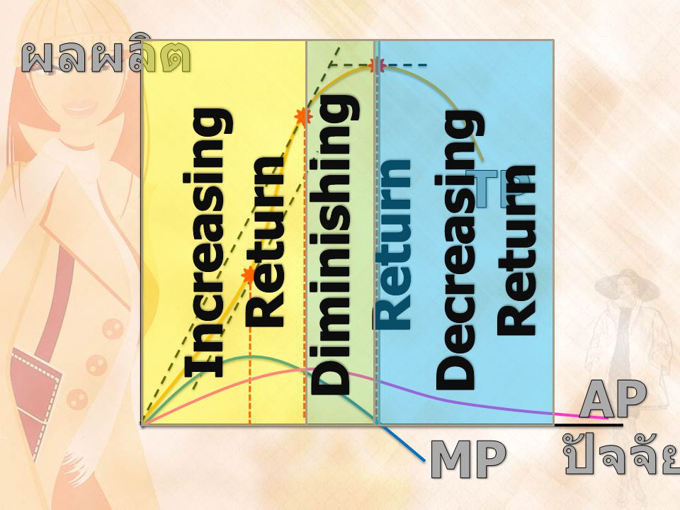 ผลผลิต ปัจจัย Increasing Return Diminishing Return Decreasing Return TP MP AP