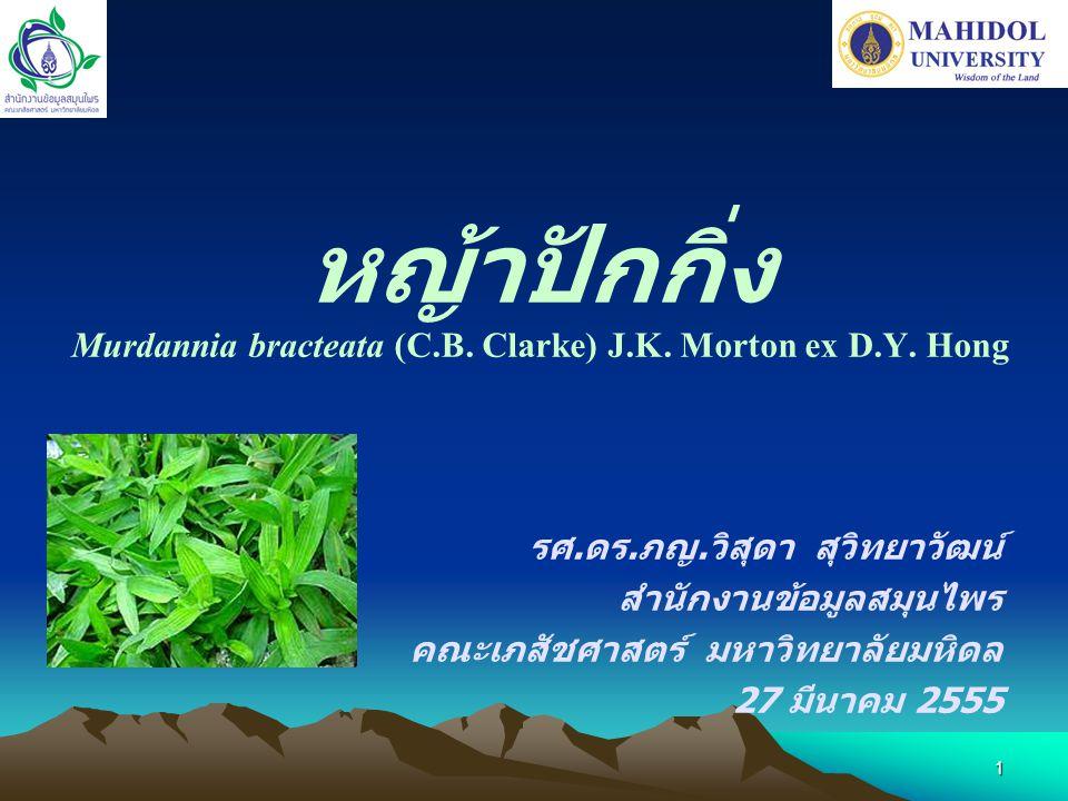 หญ้าปักกิ่ง Murdannia bracteata (C.B. Clarke) J.K. Morton ex D.Y. Hong