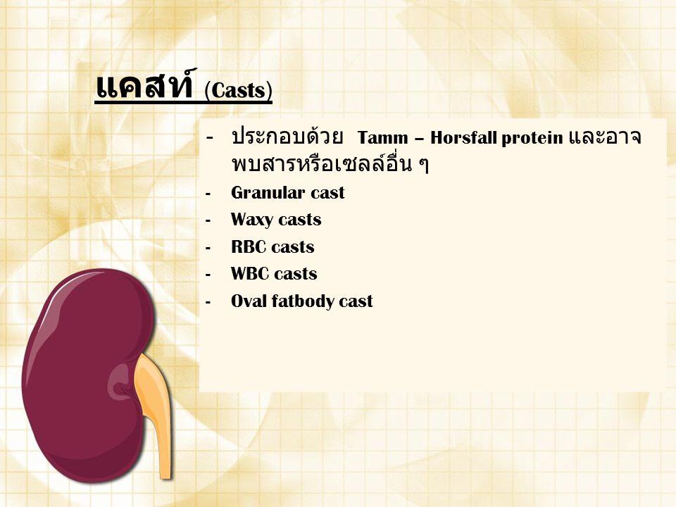 แคสท์ (Casts) ประกอบด้วย Tamm – Horsfall protein และอาจพบสารหรือเซลล์อื่น ๆ. Granular cast. Waxy casts.