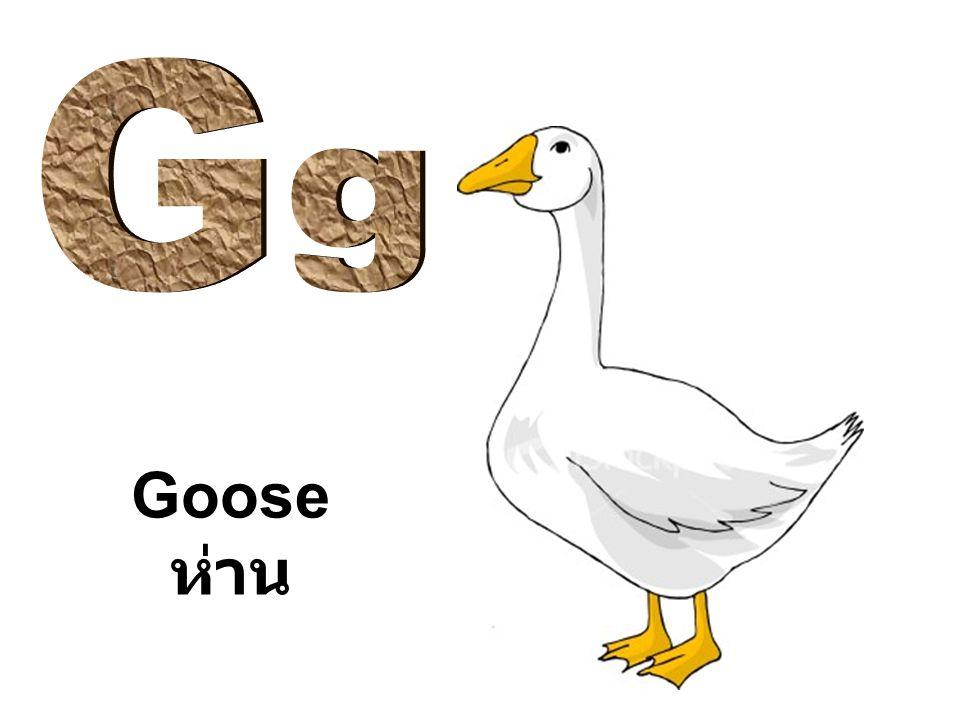 G g Goose ห่าน