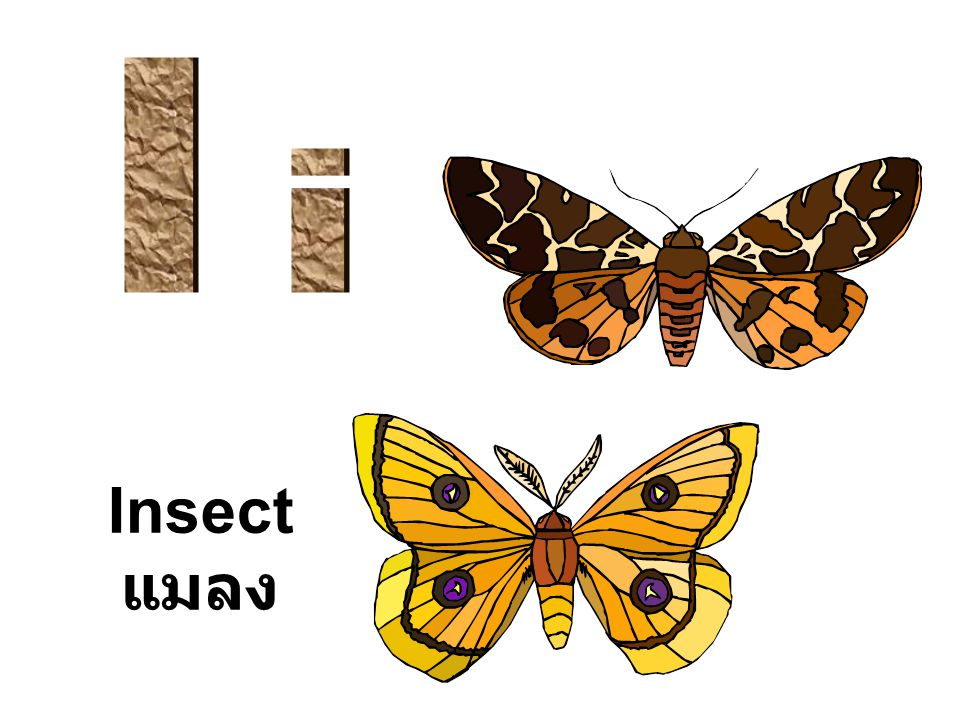 I i Insect แมลง