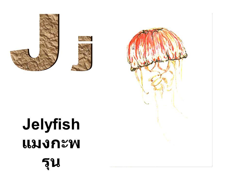 J j Jelyfish แมงกะพรุน