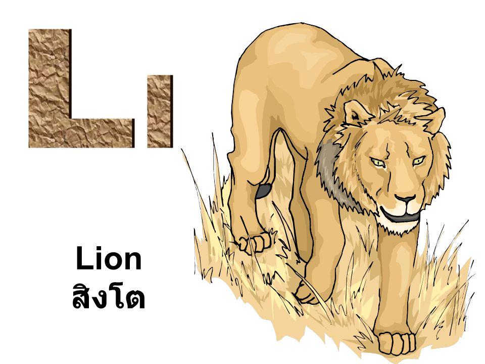 L l Lion สิงโต