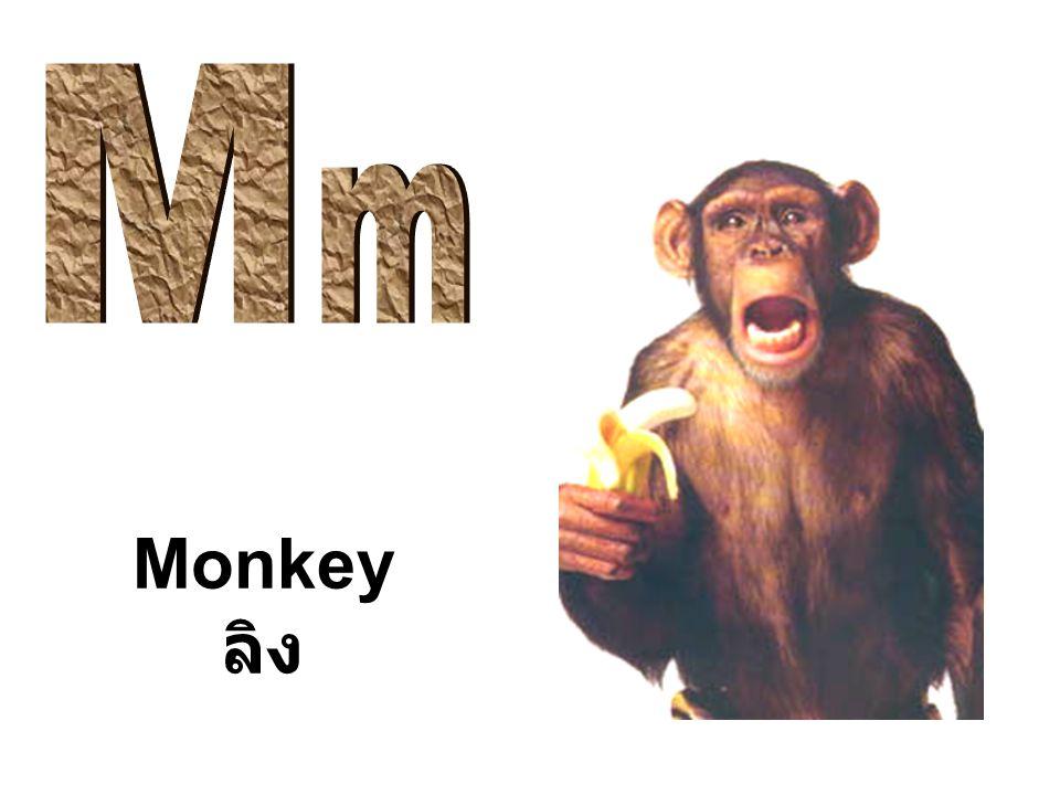 M m Monkey ลิง