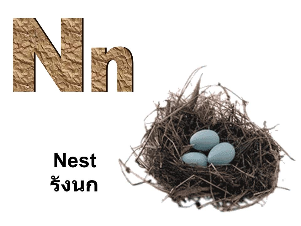 N n Nest รังนก