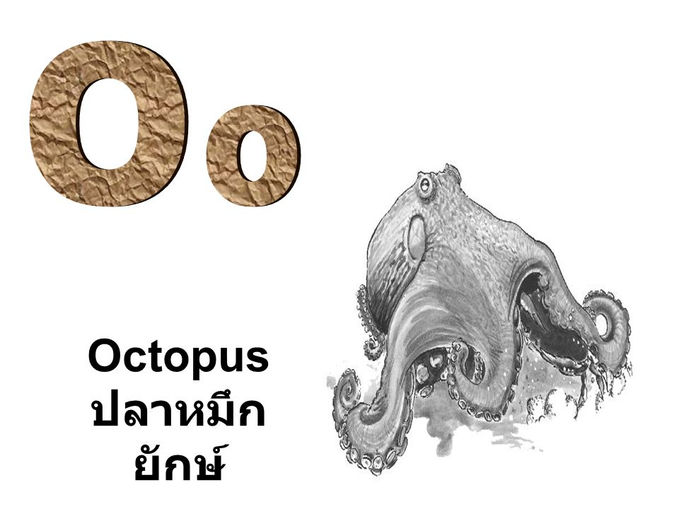 O o Octopus ปลาหมึกยักษ์