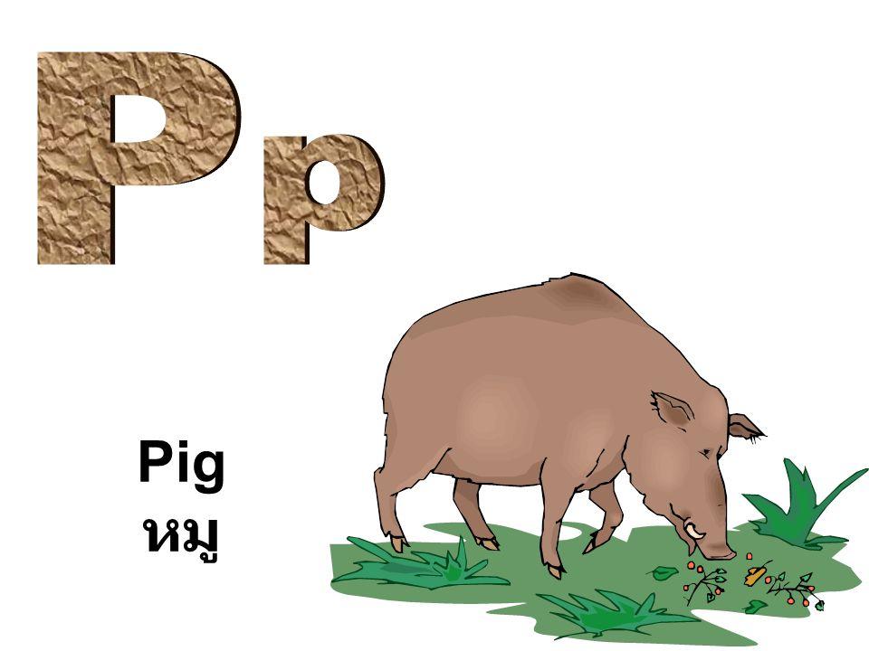 P p Pig หมู