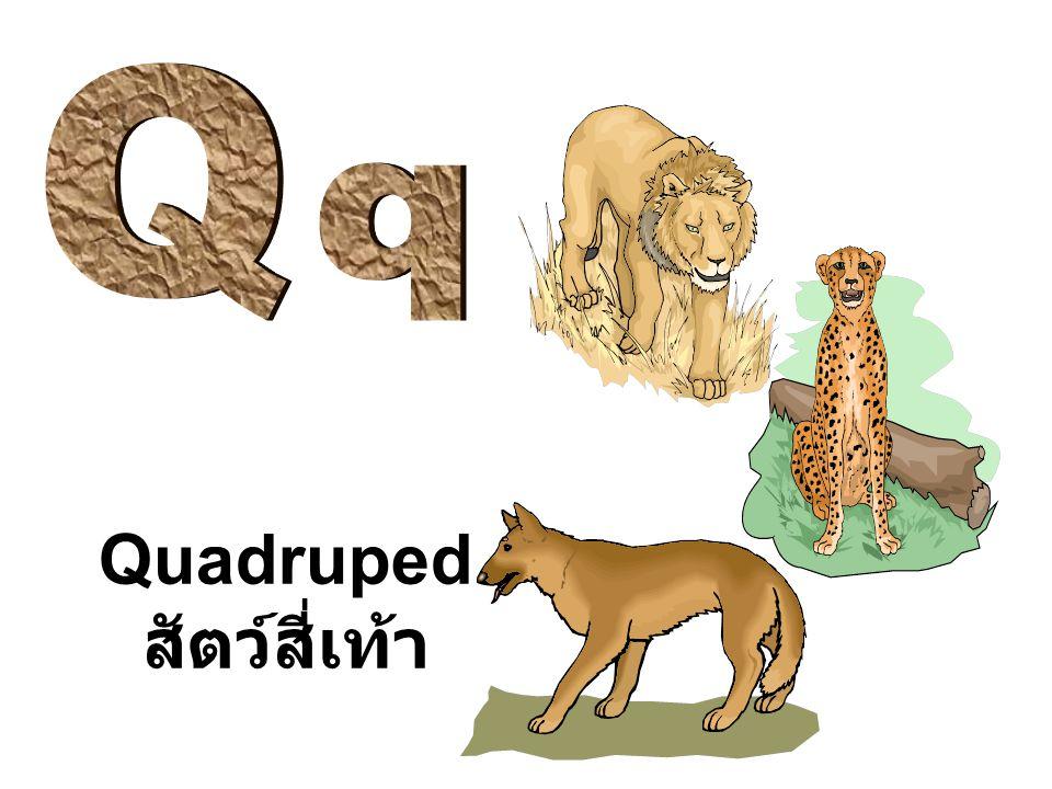 Q q Quadruped สัตว์สี่เท้า