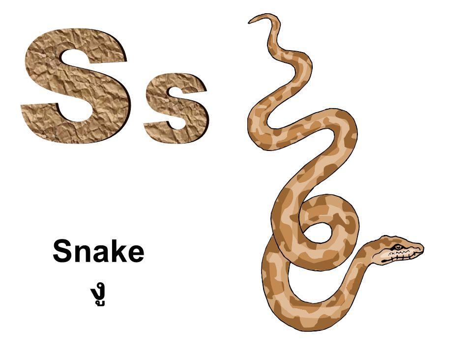 S s Snake งู