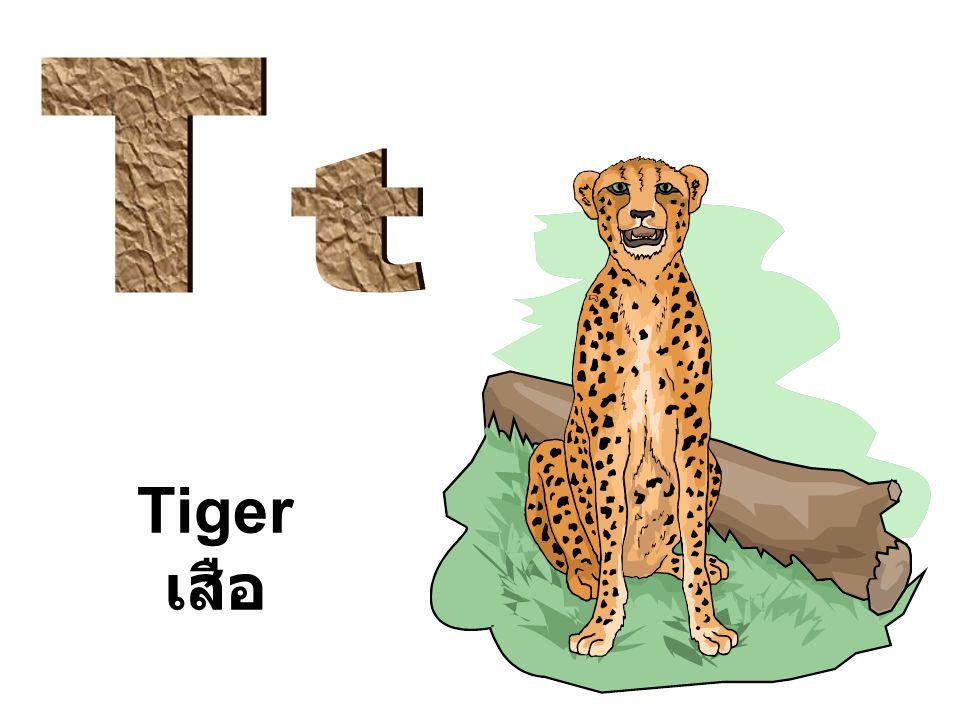 T t Tiger เสือ