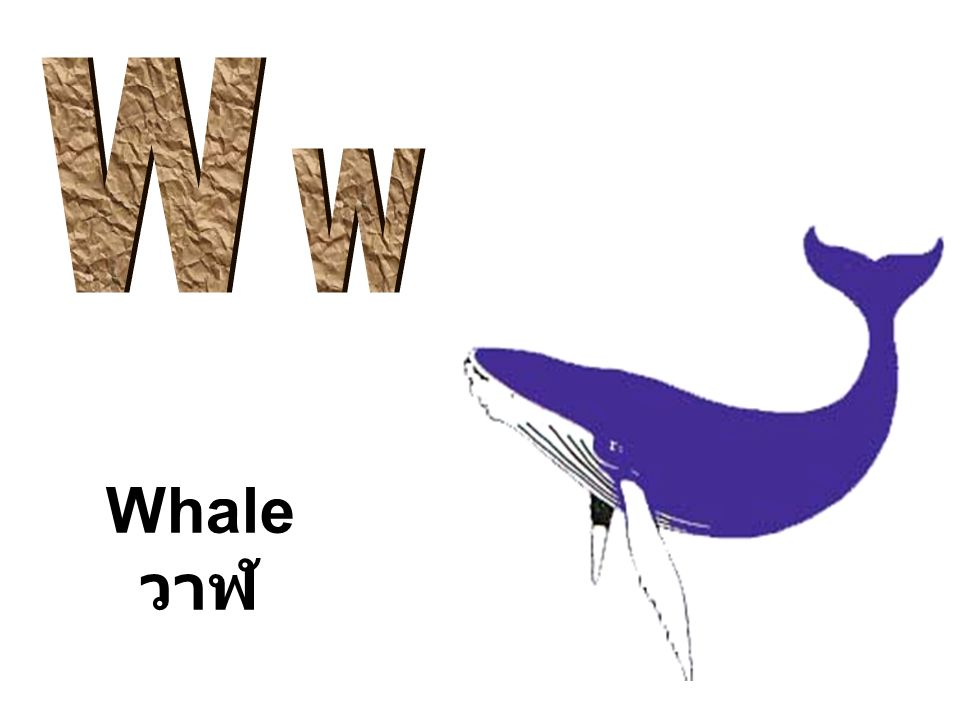 W w Whale วาฬ