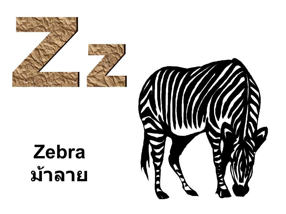 Z z Zebra ม้าลาย