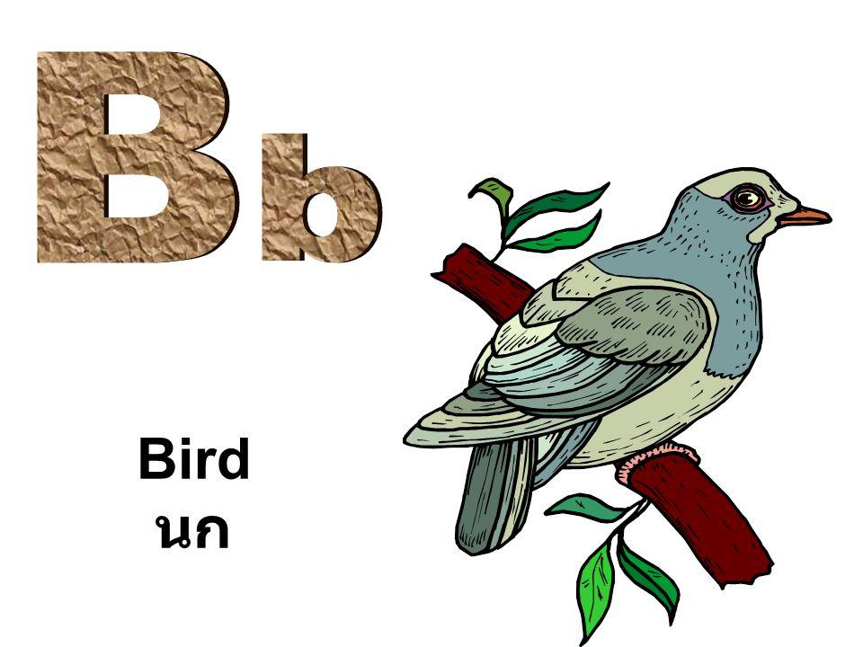 B b Bird นก