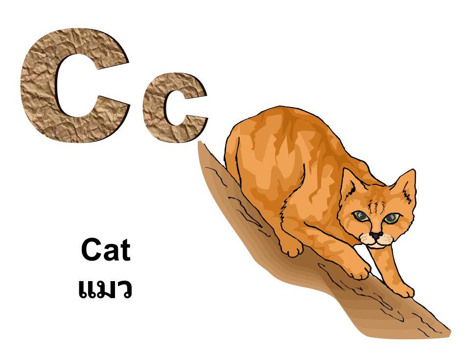 C c Cat แมว
