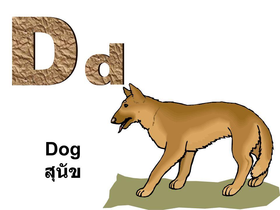 D d Dog สุนัข