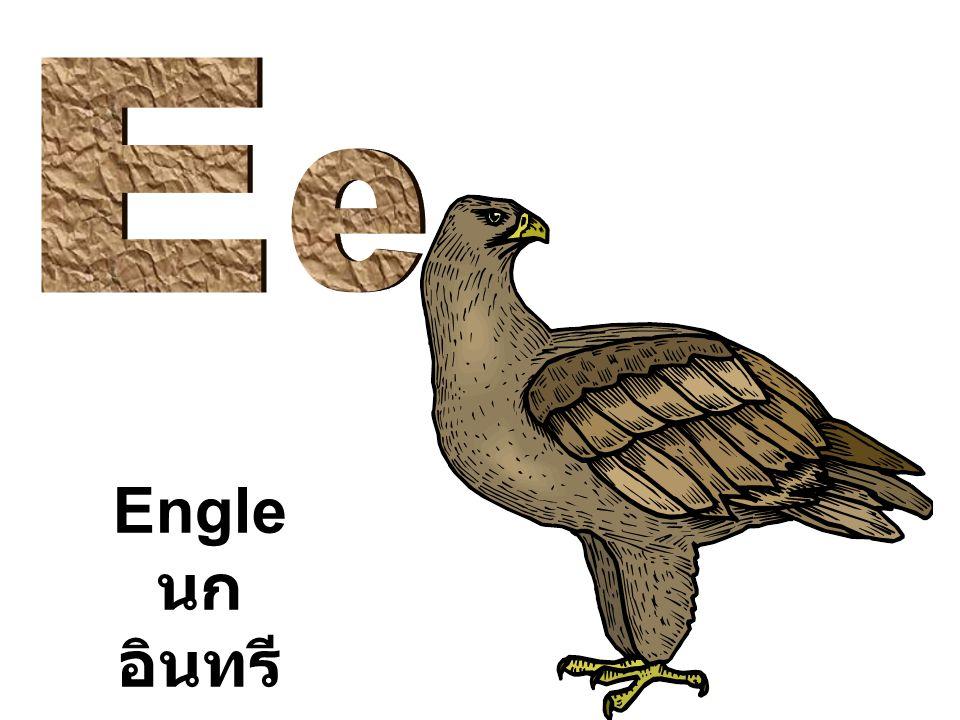 E e Engle นกอินทรี