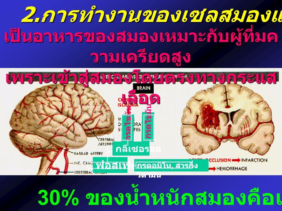 2.การทำงานของเซลสมองและประสาท