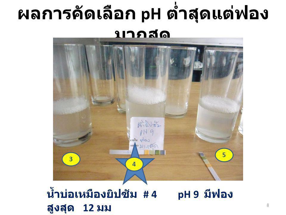 ผลการคัดเลือก pH ต่ำสุดแต่ฟองมากสุด