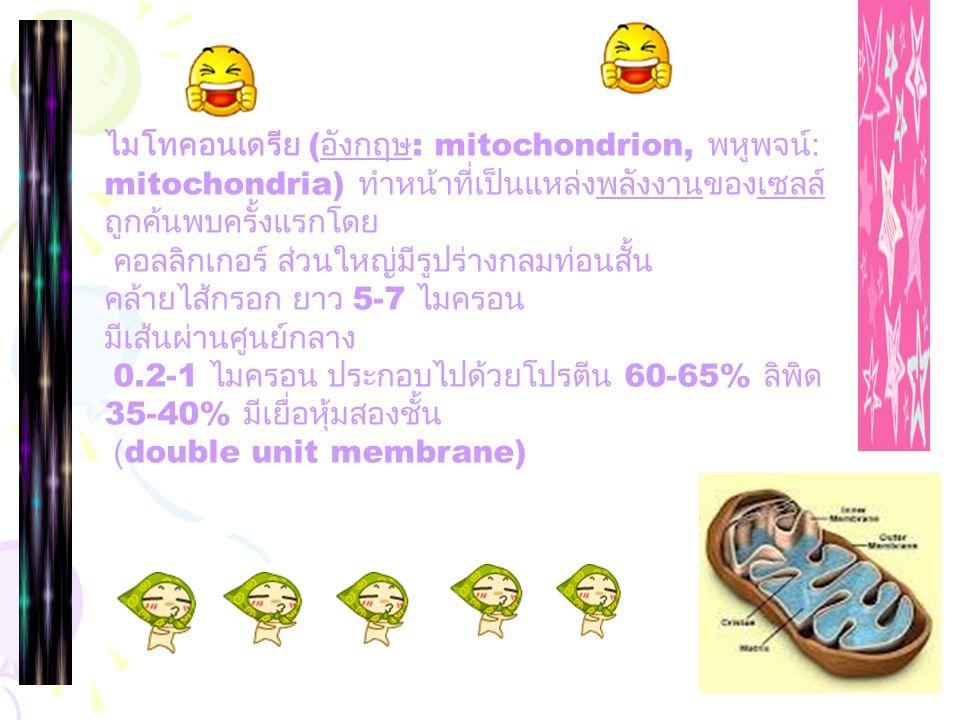 ไมโทคอนเดรีย (อังกฤษ: mitochondrion, พหูพจน์: