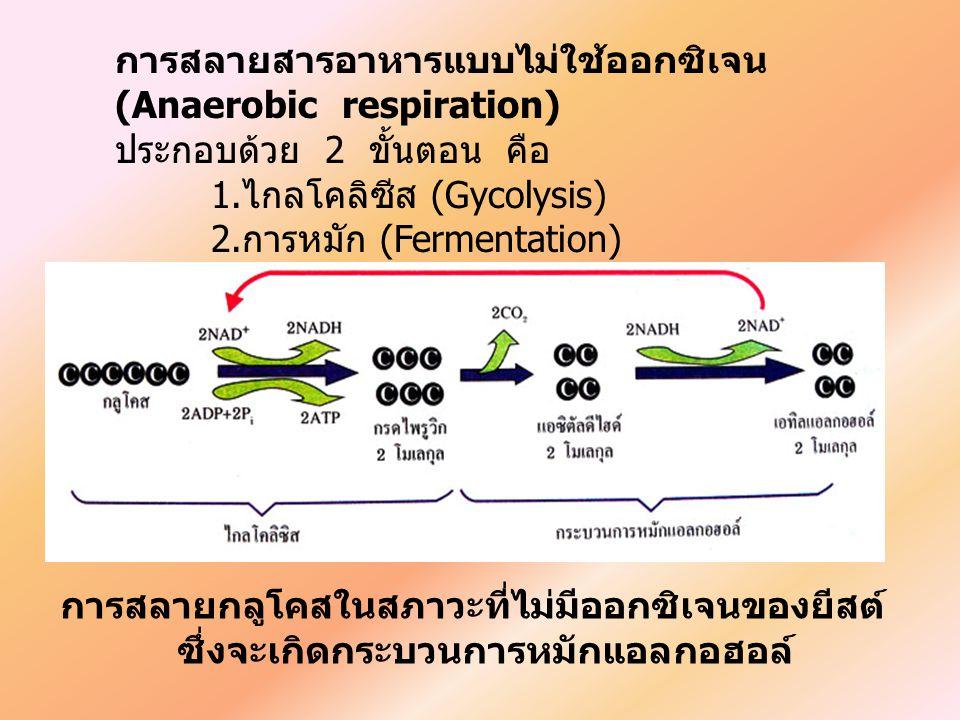 การสลายสารอาหารแบบไม่ใช้ออกซิเจน (Anaerobic respiration)