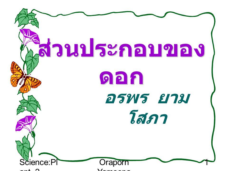 ส่วนประกอบของดอก อรพร ยามโสภา Science:Plant_2 Oraporn Yamsopa