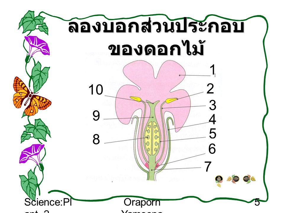 ลองบอกส่วนประกอบของดอกไม้