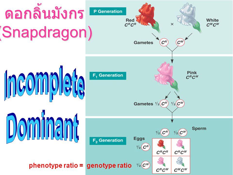 ดอกลิ้นมังกร (Snapdragon) Incomplete Dominant