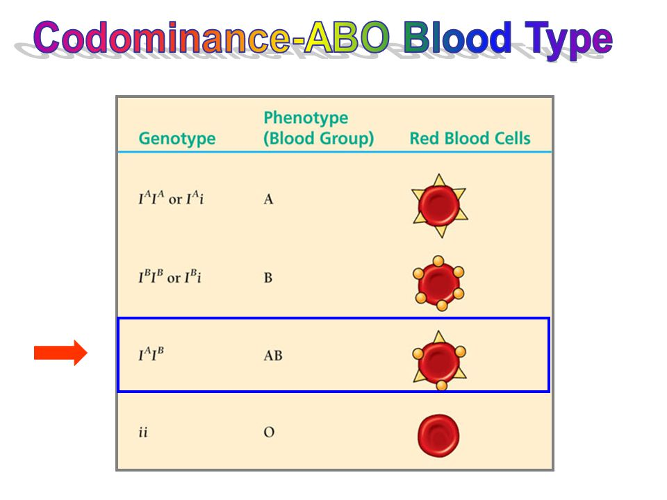 Codominance-ABO Blood Type