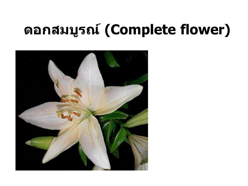 ดอกสมบูรณ์ (Complete flower)