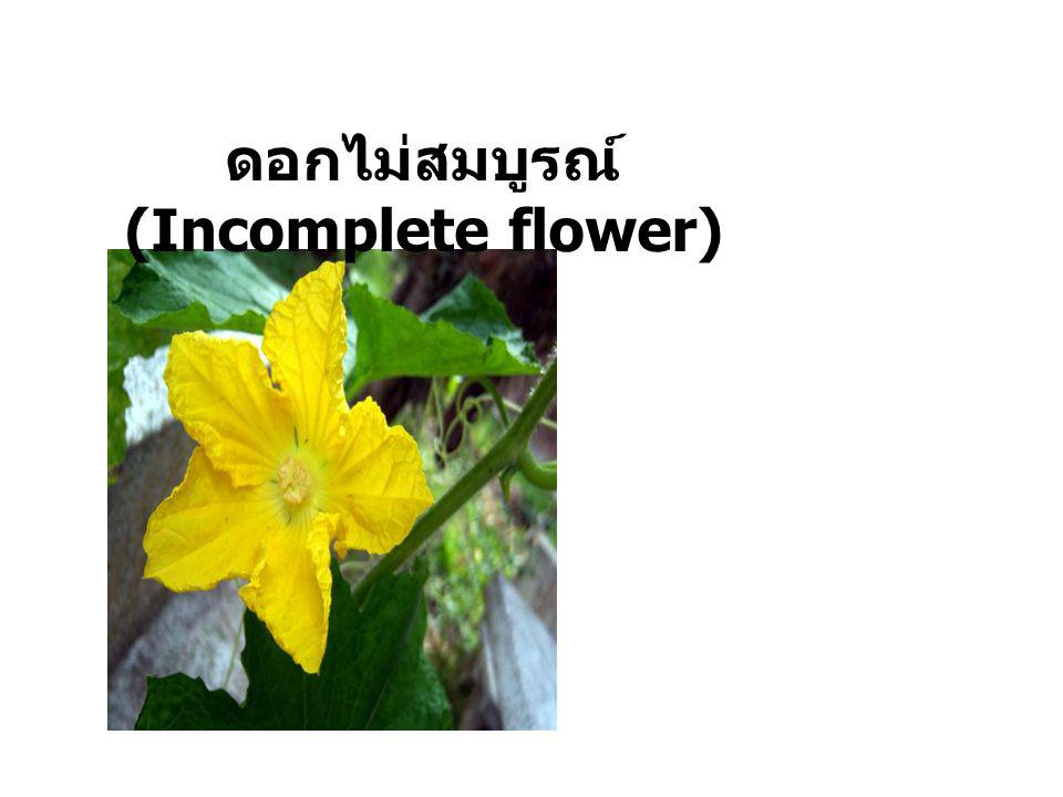 ดอกไม่สมบูรณ์ (Incomplete flower)