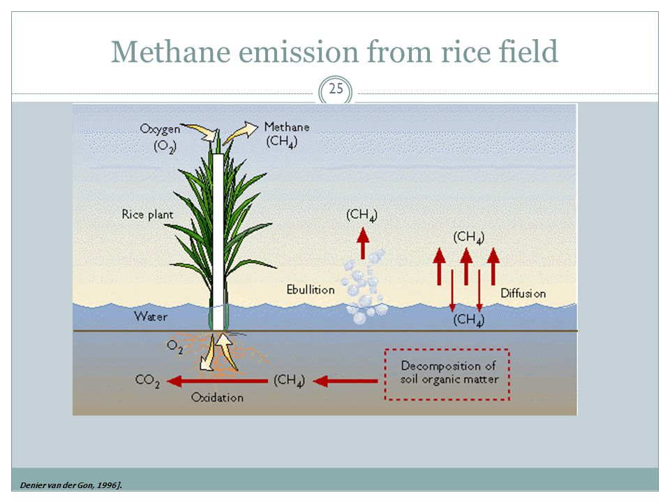 Methane emission from rice field
