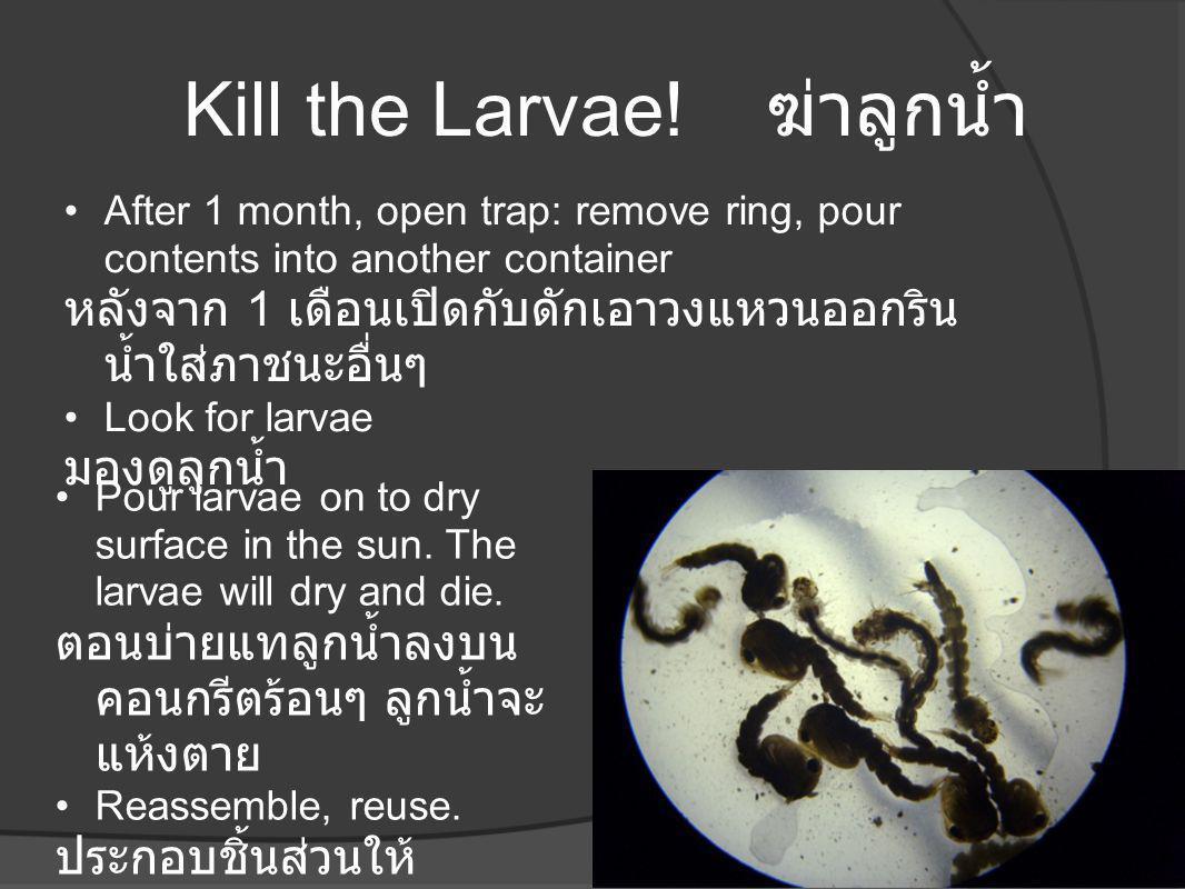 Kill the Larvae! ฆ่าลูกน้ำ