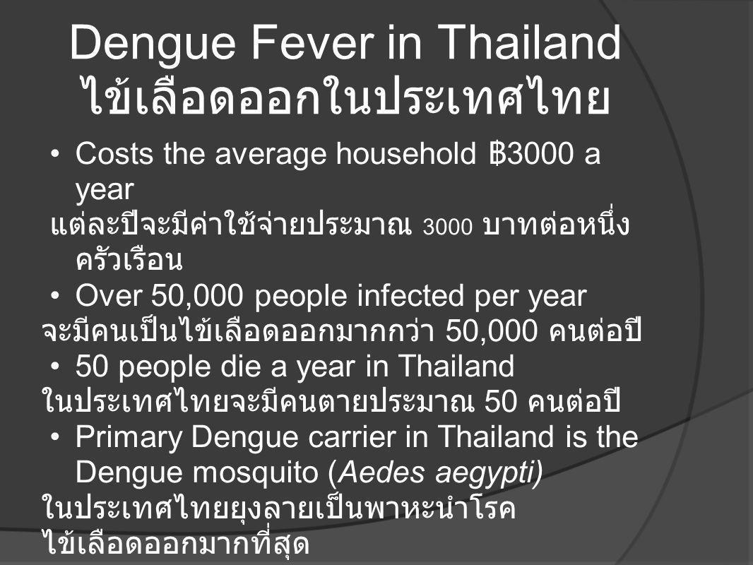 Dengue Fever in Thailand ไข้เลือดออกในประเทศไทย
